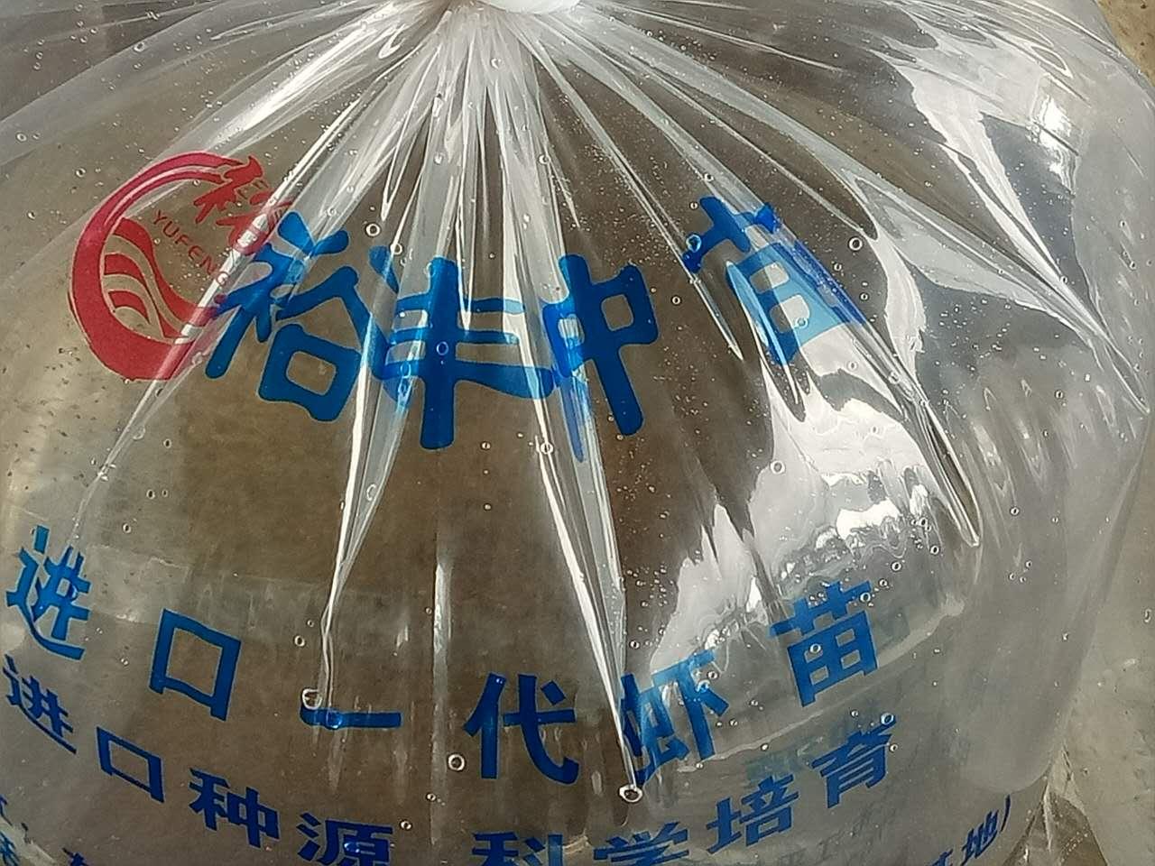 常年供应高品质虾苗、批发、可送货上门