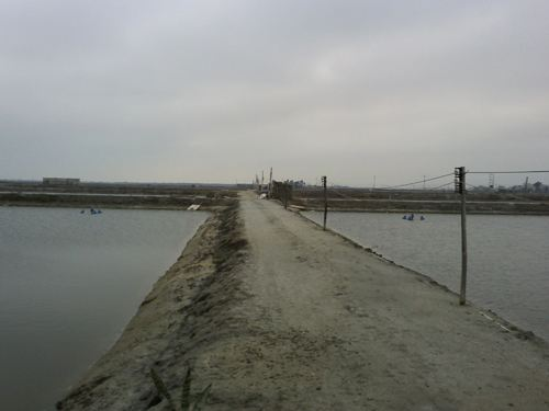 鱼塘出租、水面出租 地点安徽合肥 欢迎致电